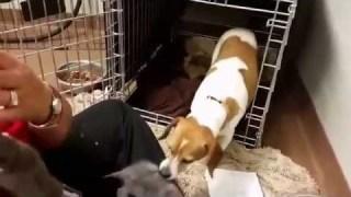 La mamma cagnetta che adotta i gattini orfani, un video commovente