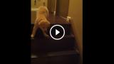 Il cucciolo non ha mai visto una scala, ma ha una mamma premurosa