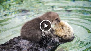 Madre e cucciolo di un giorno al riparo dalla tempesta e dai predatori