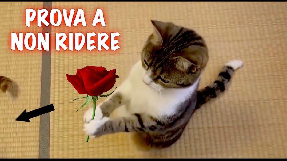 Il Video Dei Gatti Piu Divertente Di Tutti Compilation