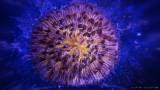 Coralli e stelle marine ad alto ingrandimento
