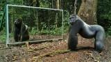 Mettono uno specchio nella foresta e le reazioni degli animali sono spettacolari!