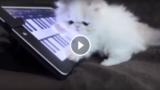 Il Micino che suona la tastiera