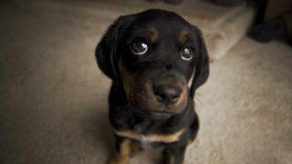Gli occhi del cane innescano l'ormone dell'amore nelle persone!