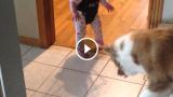 Il cane gioca con l'ombra del bambino
