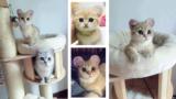 Il mistero dei gatti con le orecchie tonde