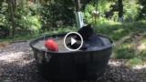L'orso che fa il bagno nella tinozza se la gode un mondo!