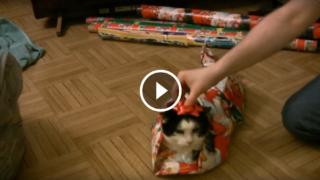 Come impacchettare un gatto per Natale