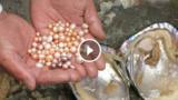 Una donna fortunata apre una conchiglia e trova tantissime perle