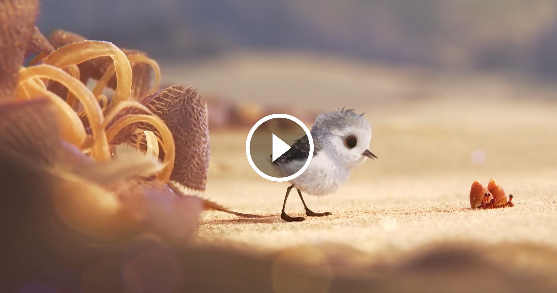 PIPER, il bellissimo corto della Pixar che ci insegna a guardare le cose da un'altra prospettiva ⋆