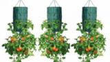 Come Coltivare i Pomodori a Testa in Giù