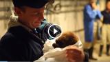 Cucciolo di Lontra di mare salvato sulla spiaggia della California