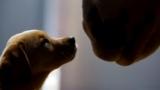 PUPPY LOVE – L'amore tra un cagnolino e un cavallo.
