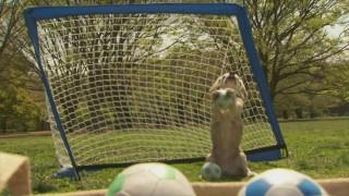 Purin, il beagle para 14 mini palloni in un minuto: nuovo record!