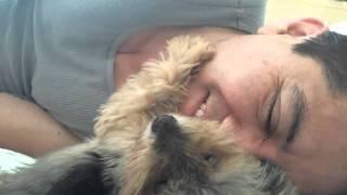 Chi non vorrebbe un cane così?