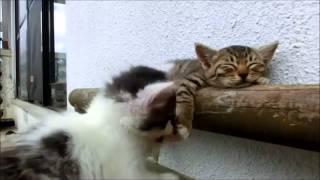 Questo è il video sui gatti più bello di tutti!