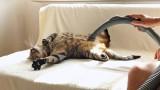 Questo gatto ama essere aspirato, dall'aspirapolvere naturalmente…