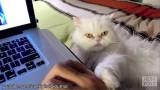 Gatti che COMANDANO gli umani