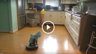 Il gatto-squalo pulisce la cucina
