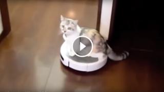 Pulisci casa e il gatto si diverte! Una compilation spettacolare