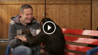 Lo scimpanzé e i giochi di magia con l'iPad 😆😆😆