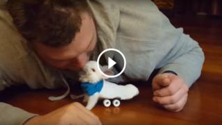 Ha realizzato una mini sedia a rotelle al coniglietto paralizzato… che ora corre felice!