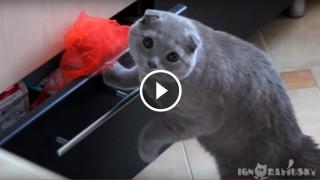 Lo sguardo colpevole del gatto colto sul fatto
