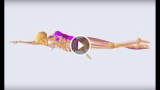 Quali muscoli utilizziamo per nuotare?