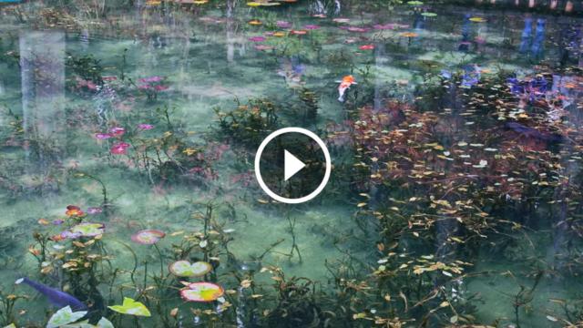 """Così meraviglioso che sembra un dipinto.  Si chiama """"Stagno di Monet"""" e vi lascerà senza fiato."""