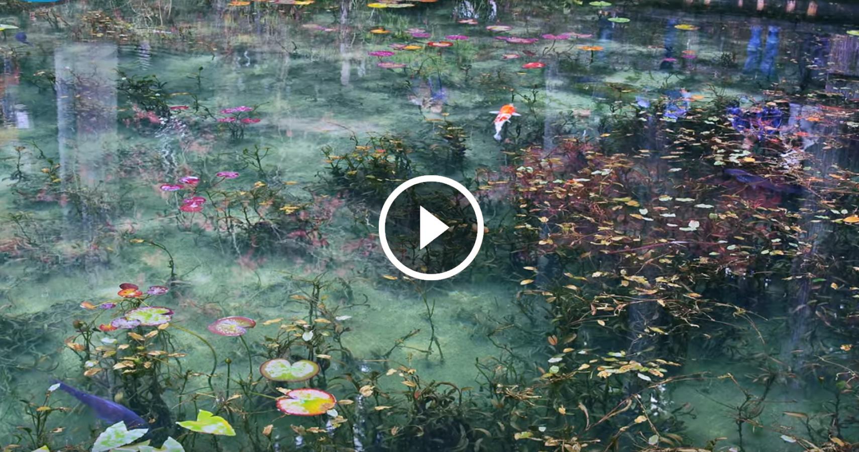 Cos meraviglioso che sembra un dipinto si chiama stagno for Pesci di stagno