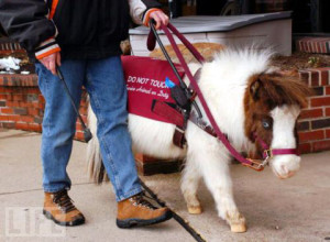 the-american-disabilities-act-protects-service-animals-saying-they-can-go-anywhere-their-owners-go
