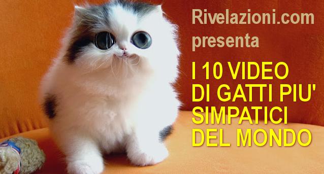 I 10 Video Piu Simpatici Sui Gatti