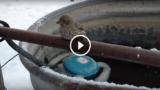 Le zampe si gelano e l'uccellino rimane attaccato al tubo: poi il bellissimo gesto dell'uomo…
