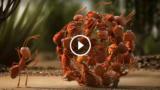 L'UNIONE FA LA FORZA: 3 animazioni esemplari