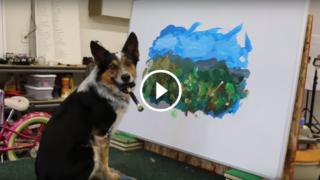 Straordinario! Il cane che dipinge quasi come Van Gogh