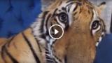 Il video di animali più bello di tutti è questo!